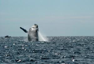 No, that\'s a whale