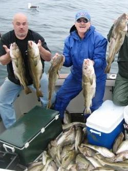 Cod Limit Bubba's Boys Cod Fishing Chrter Gloucester on Tuna Hunter